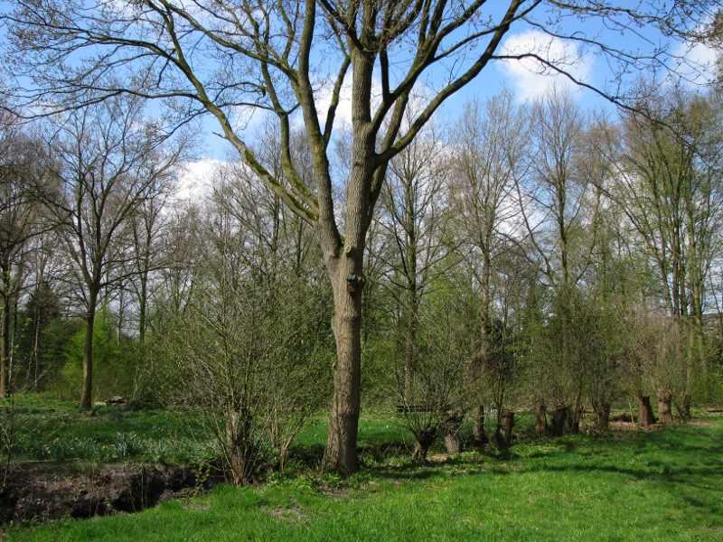 Natuurpark_Eik_met_knotbomen
