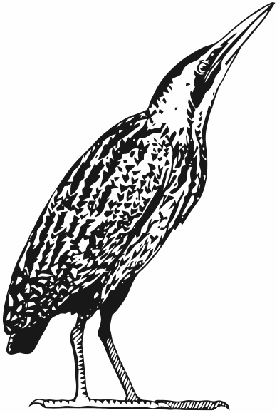 20081205_MNV_Roerdomp_Logo_2_Transparant_1_389x579px