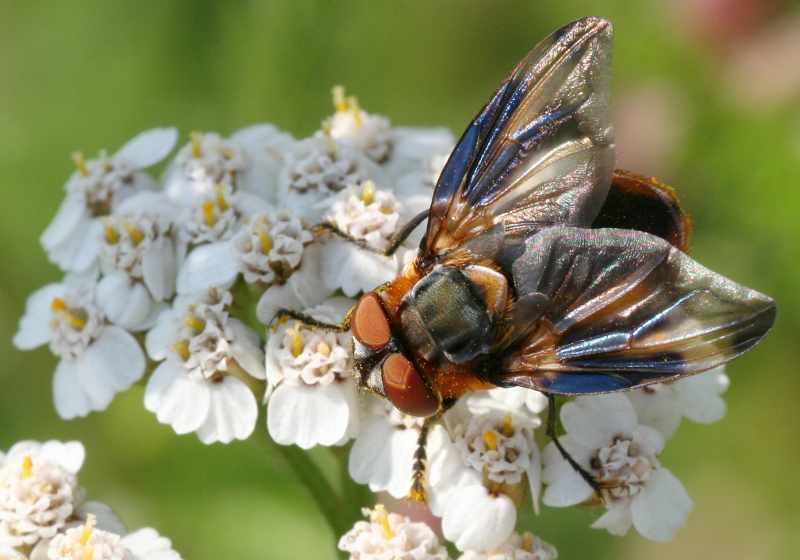 20100803_EcoBioKwis_Determineer_Insect